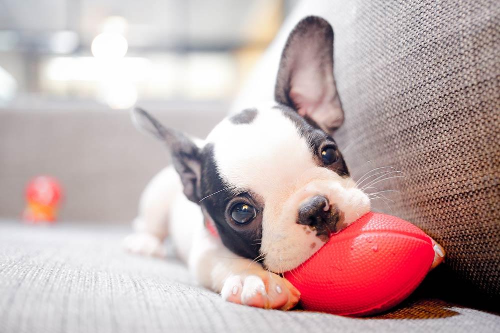 Adopt - Tshwane SPCA