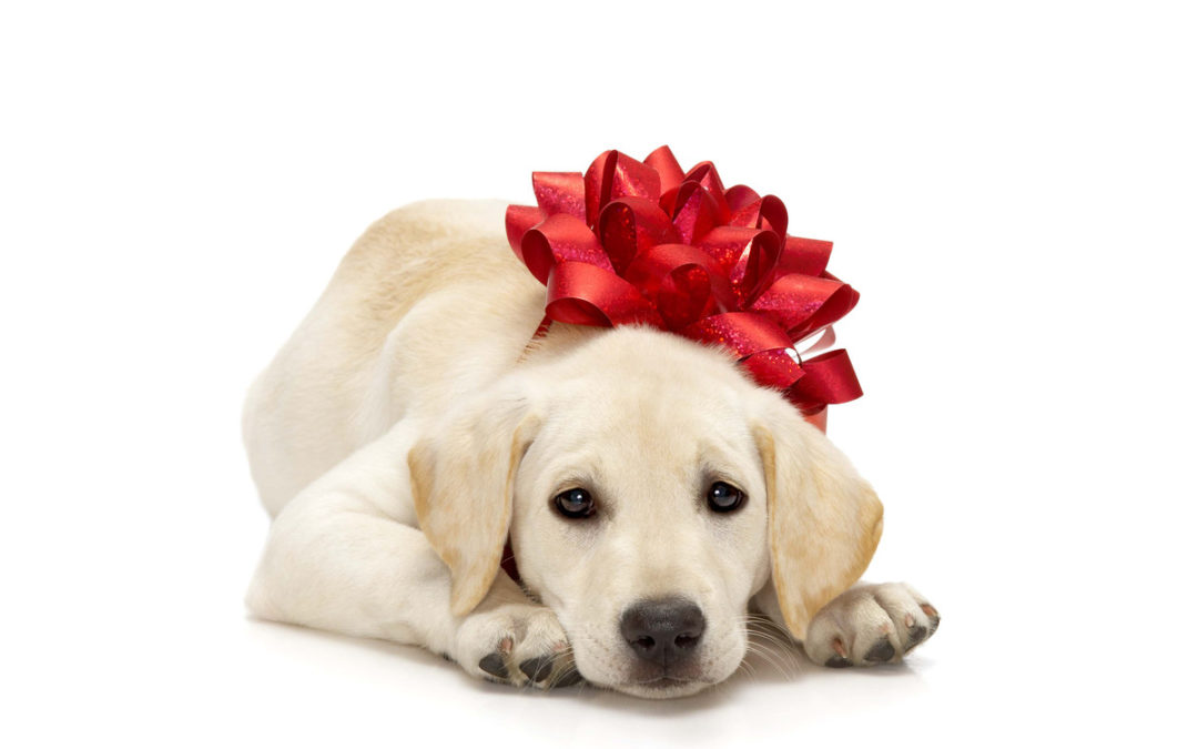 Do not give pets as gifts this Christmas